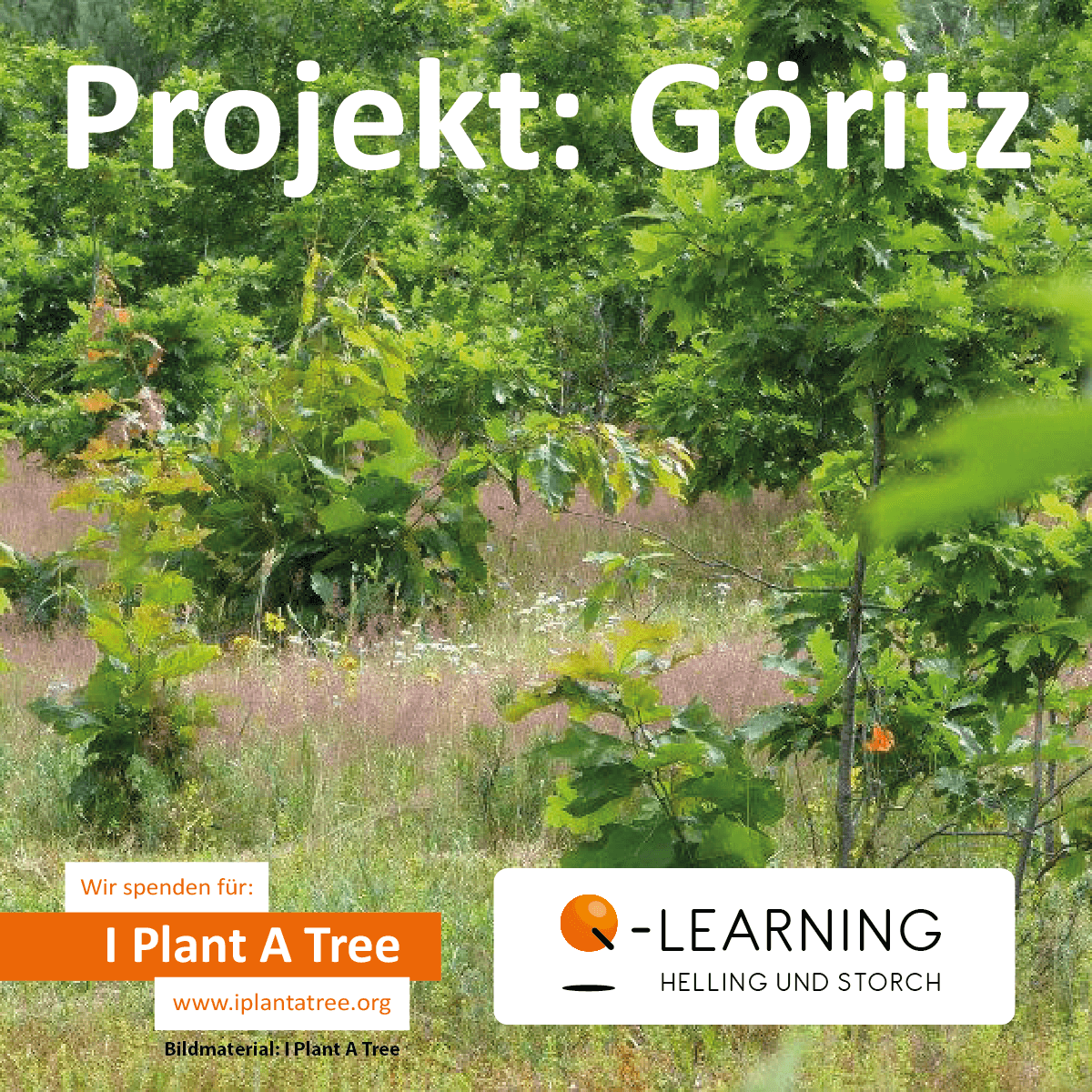 Q-LEARNING | I Plant A Tree Projekt Göritz 2012