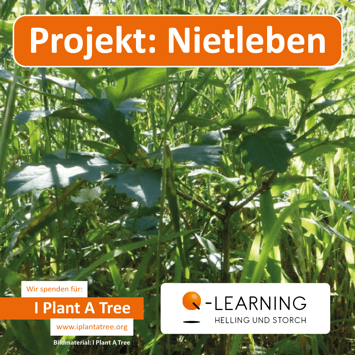 Q-LEARNING | I Plant A Tree Projekt Nietleben 2013