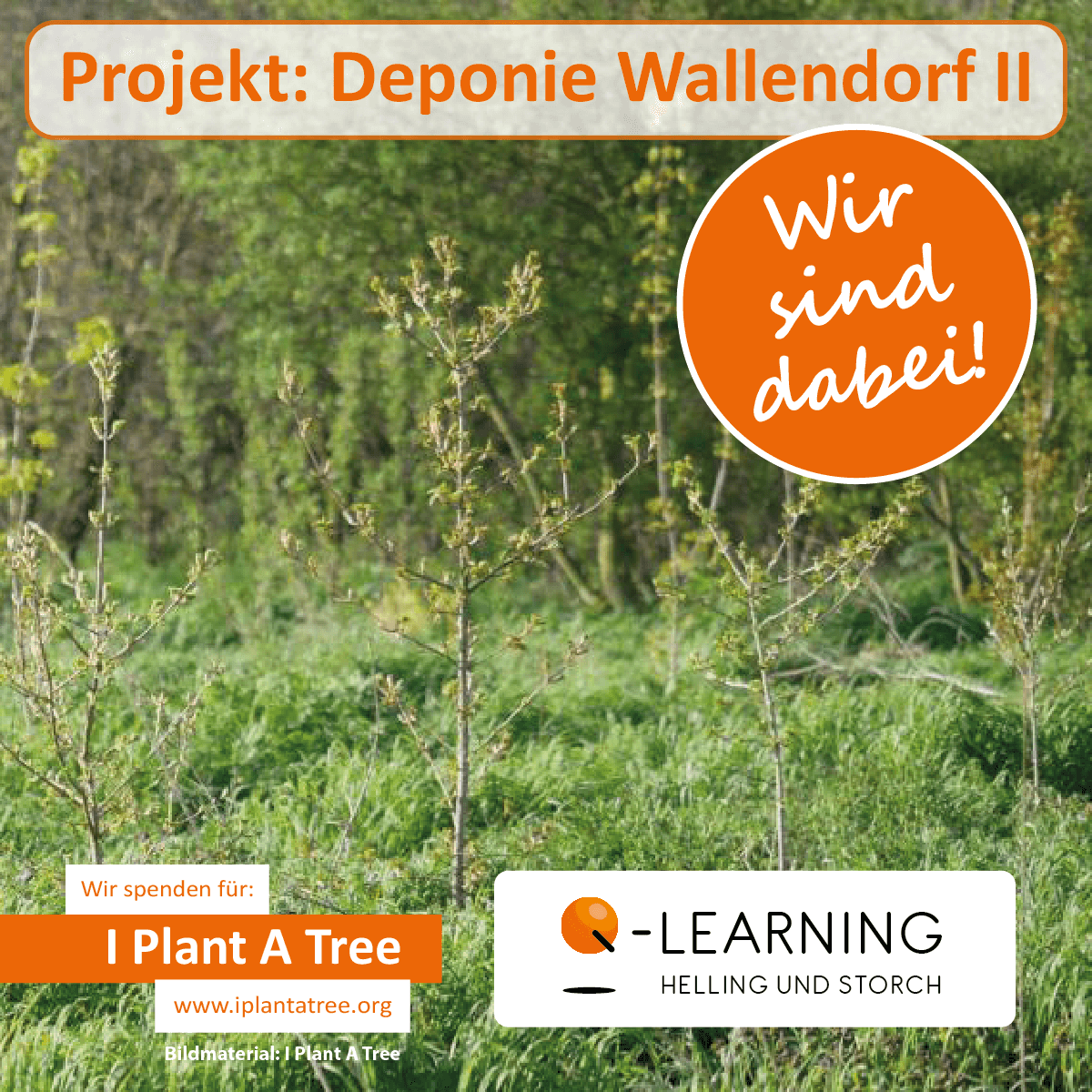 Q-LEARNING | I Plant A Tree Projekt Wallendorf II 2015