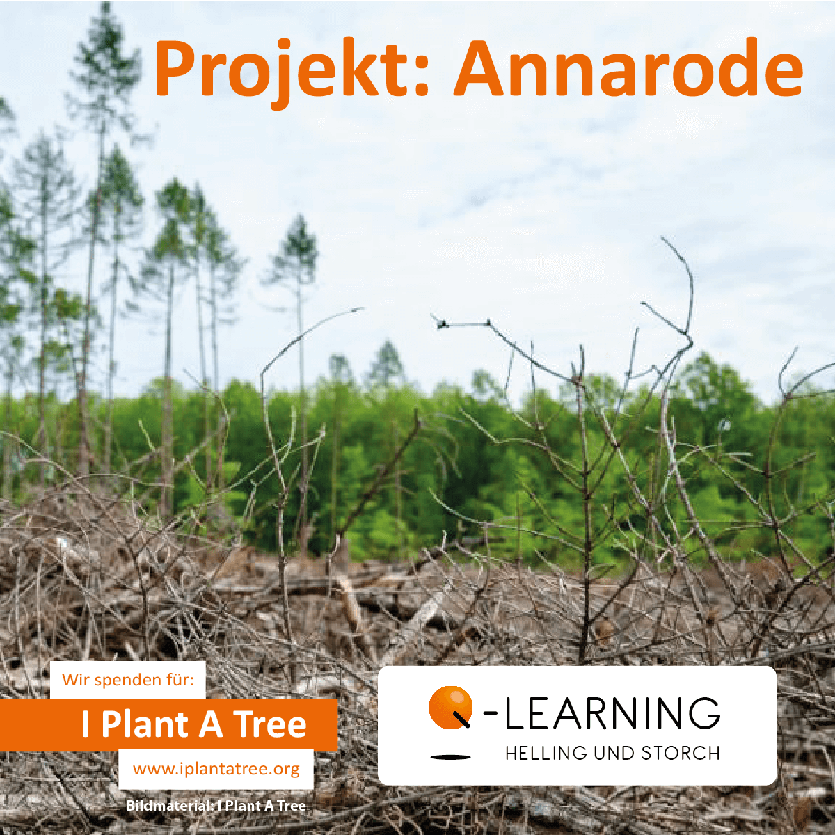 Q-LEARNING | I Plant A Tree Projekt Annarode 2020
