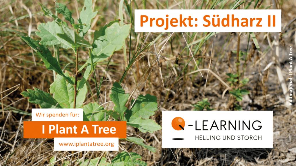 Q-LEARNING   I Plant A Tree Projekt Südharz 2021