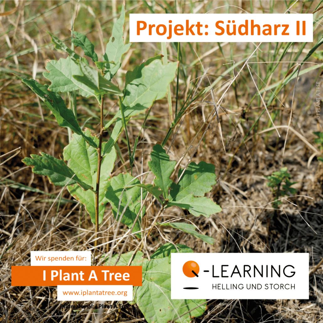 Q-LEARNING | I Plant A Tree Projekt Südharz 2021
